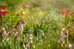 Cat in the flower bed hunts on the mouse. Royalty Free Stock Photography