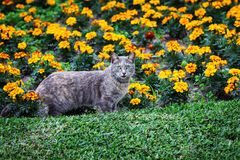 Cat and flower bed Stock Images