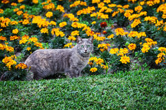 Cat and flower bed Stock Photography