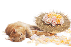 Cat with flower bouquet Stock Photography