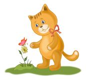 Cat, flower and butterfly Stock Photos