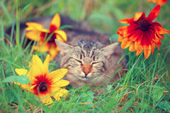 Cat in flower Royalty Free Stock Photos
