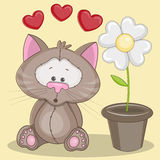 Cat with flower Stock Image