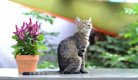 Cat and flower Stock Images