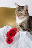 Cat and flower headband Stock Image