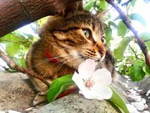 Cat or flower?. A cat like a flower Royalty Free Stock Image