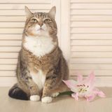 Cat with flower Stock Photos