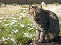 Cat At The Flower Meadow Fotos de archivo libres de regalías