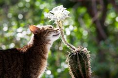 Cat and flower Royalty Free Stock Image