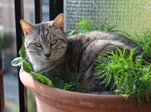 Cat in flower pot Stock Image