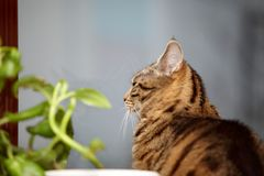 Cat and flower on the window Royalty Free Stock Photo