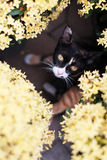 Cat and flower. A cat among the yellow flowers royalty free stock photos