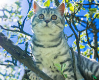 Cat on a flowering tree Stock Image