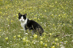 Cat and flowers. Cat on green grass, cat in nature Royalty Free Stock Photography