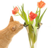 Cat and flowers Stock Image
