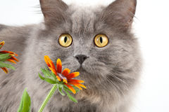 Cat with flowers Stock Images