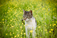 Cat in flowers Royalty Free Stock Photos