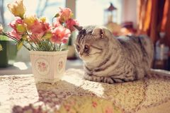 Cat and flowers Royalty Free Stock Image