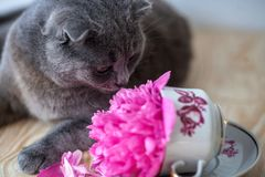Cat and flowers stock photo