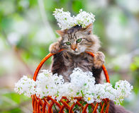 Cat in flowers stock photos