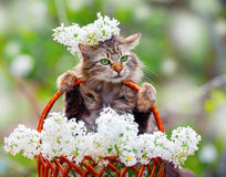 Cat in flowers Stock Photo