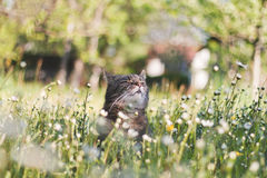 Cat in flowers Royalty Free Stock Images