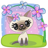 Cat with flowers Stock Photos