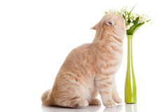 Cat with flowers isolated on white backgroud spring postcard Royalty Free Stock Photography