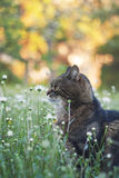 Cat in flowers Stock Images