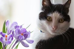 Cat and flowers Stock Photos