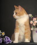 Cat with flowers Stock Photo
