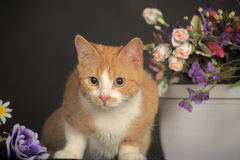 Cat with flowers Royalty Free Stock Images