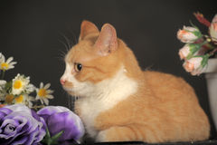 Cat with flowers Stock Photography