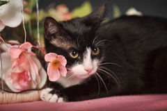 Cat among the flowers Stock Images