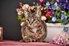 Cat among the flowers Royalty Free Stock Photography