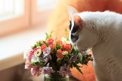 Cat and flowers. White cat smelling flowers. Turkish van cat and field flowers. Valentine day stock photography
