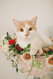 Cat with flowers in wicker basket of white retro bisycle Royalty Free Stock Photos