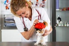 Cat flu royalty free stock image