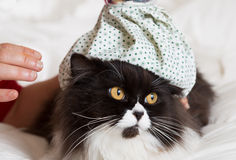 Cat flu Royalty Free Stock Photography
