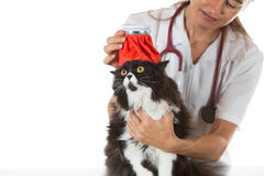 Cat flu Royalty Free Stock Photos