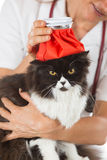 Cat flu. Persian cat flu and a hot water bottle on head Stock Photos