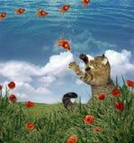 Cat and flying goldfish stock photos