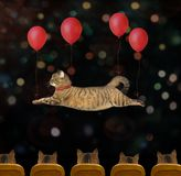 Cat flying by red balloons in the circus
