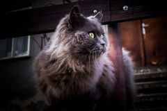 Cat focused on a noise Stock Photography