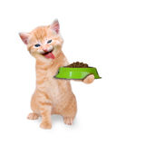 Cat with food bowl. On white background royalty free stock image