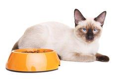 Cat With Food Bowl tailandesa Fotografía de archivo