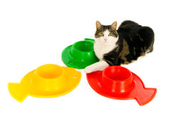 Cat with food bowls Stock Photos