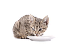 Cat with food cup Stock Images