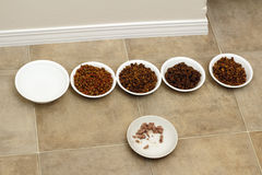 Cat Food Variety. Four different bowls of dry cat food, a bowl of moist food, and a water bowl Royalty Free Stock Photos