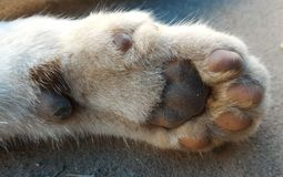 Cat foot Stock Images